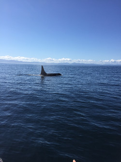 Orca Visitor Fishing Charter In Sooke