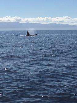Killer Whale Fishing Charter in Sooke