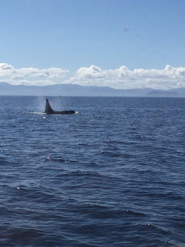 Killer Whales Sooke Fishing Charter