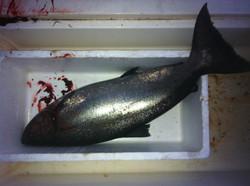 salmon fishing charters nanaimo