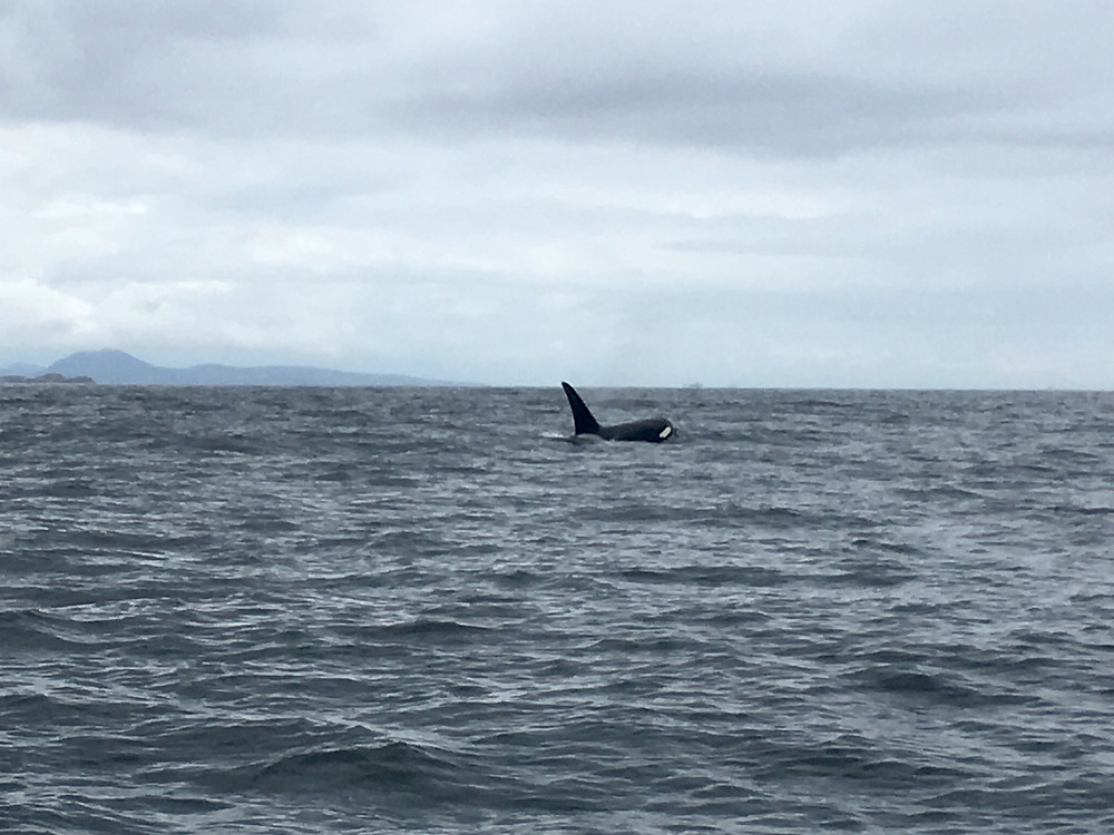 killer whales nanaimo fishing charters