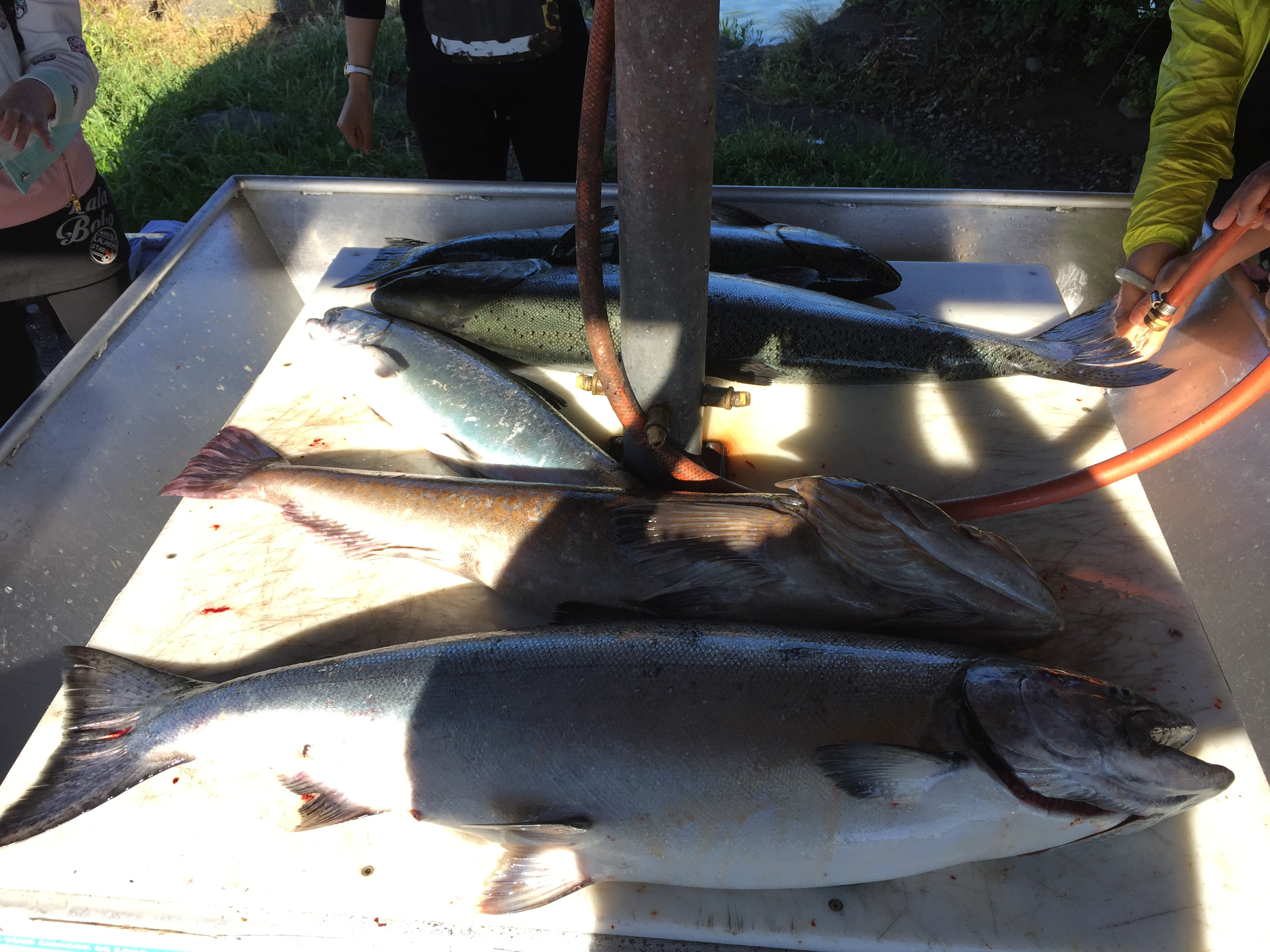 Nanaimo fishing charters nice catch