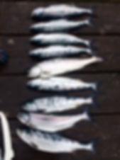 fishing charters in nanaimo, fishing charters on vancouver island