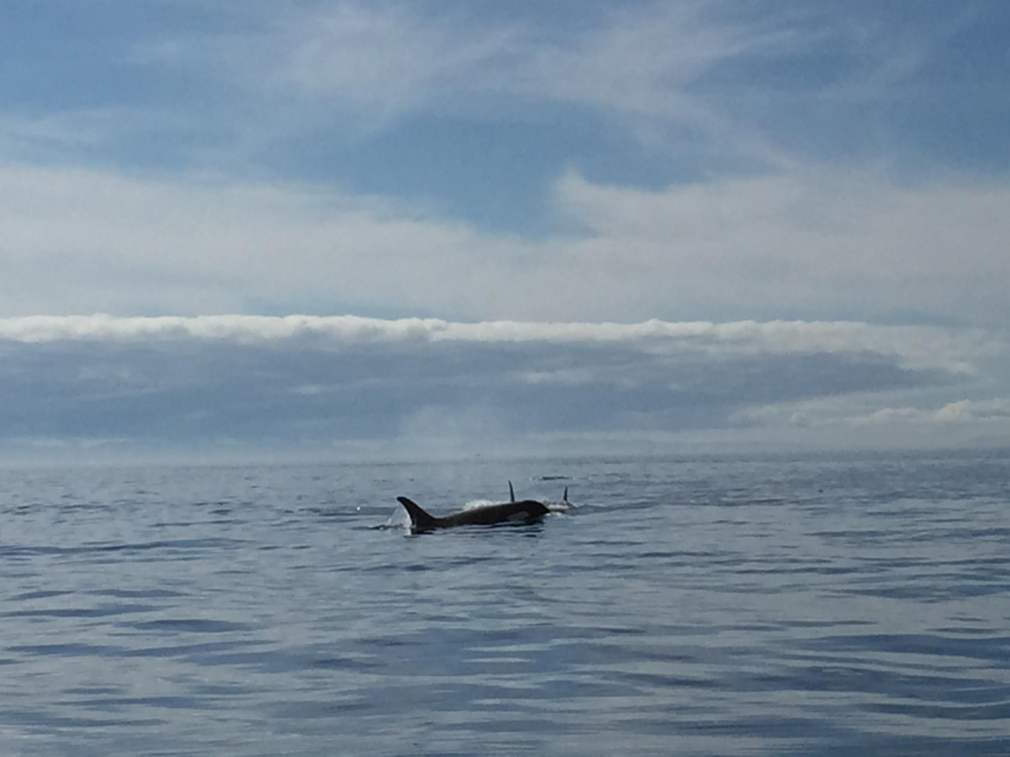 Orcas Sooke Fishing Charters