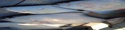 halibut fishing charters in sooke
