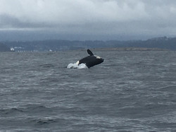 killer whales on nanaimo fishing charters