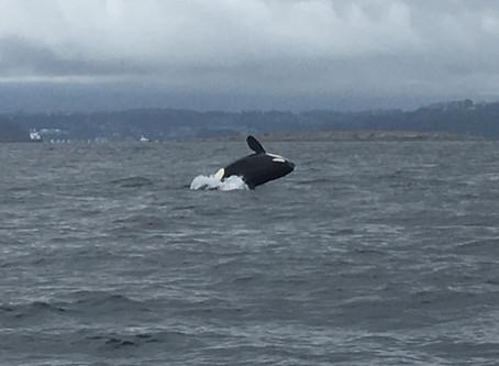 Nanaimo Fishing Charters Report 6/24/17