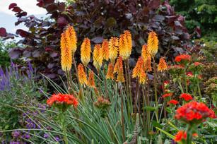 Misderden Garden, Cheltenham