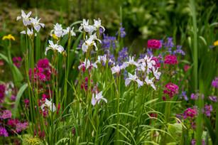 Aberglasney Spring Bulbs