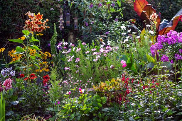 Richard's Cotswold Garden