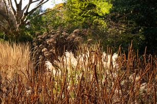 Knoll Gardens Grass Border