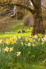 Miserden Garden, Nr Stroud