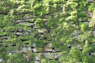 Newark NT - Moss Cotswold Wall