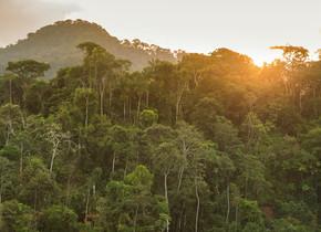 Mister botanique: foret tropicale