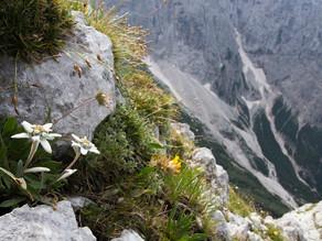 Mister Botanique: Les plantes en montagne