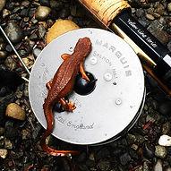 Olympic Peninsula Fly Fishing OP Fly Fishing