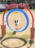 Venue Big Creek-GA-Dog Park-Through the