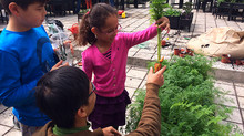 Urban farming workshop for kids @ The Fringe Club