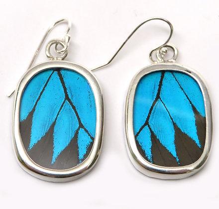 Small Blue Morpho Earrings