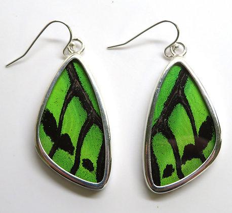 Medium Green Earrings