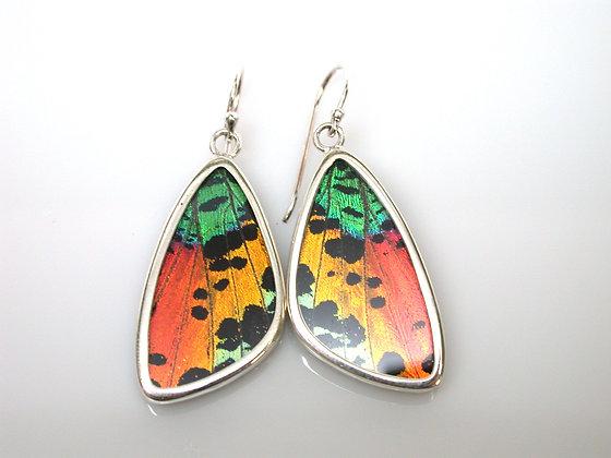 Medium Sunset moth earrings
