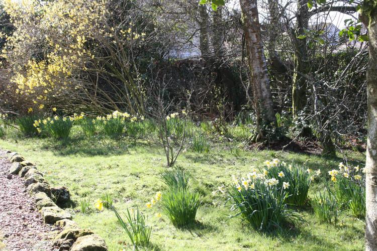 Spring in the wild bit