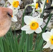 Stunning Spring Gardens!