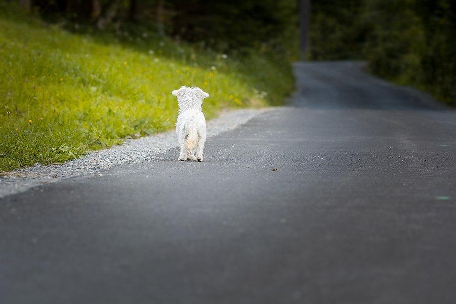dog-1543329_1280.jpg