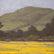 Early Yellow - II