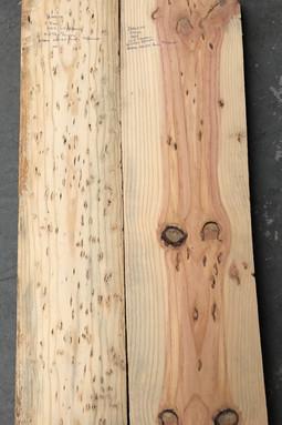 Bird-eye Ponderosa Pine