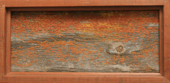Ranch Wood with Lichen, framed