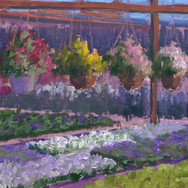 Hanging Baskets at the Nursery - I