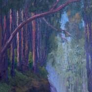 Eucalyptus on Lobitos Creek Road