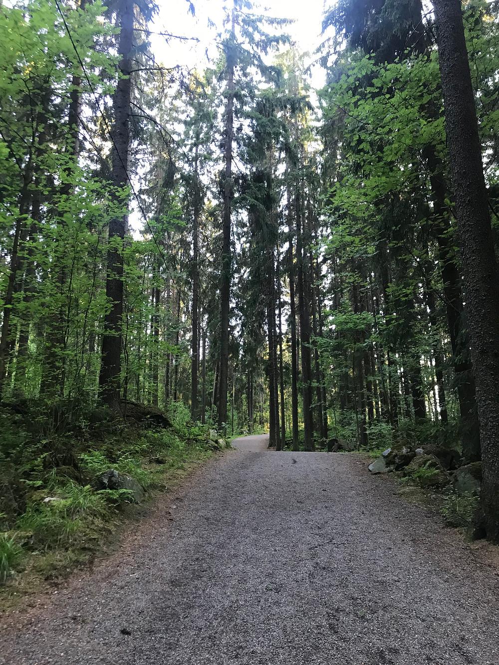 こんな森の中を通って着いた場所は、