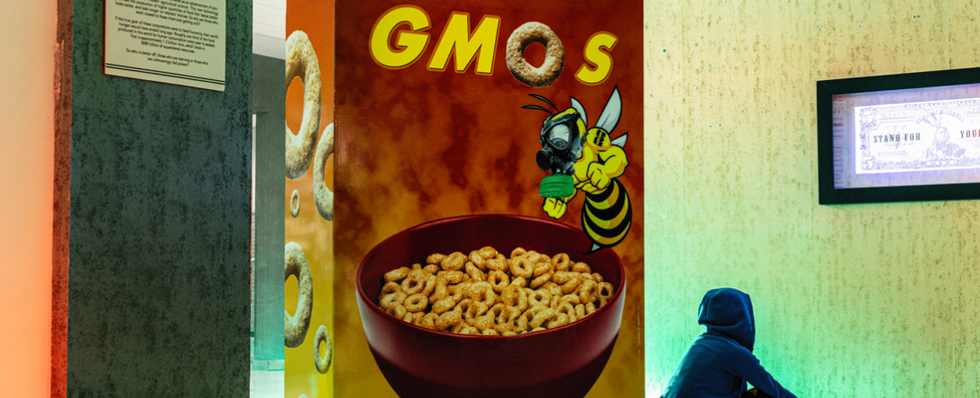 Honey Nut GMOs