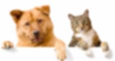 friends-animals-cat-dog.jpg