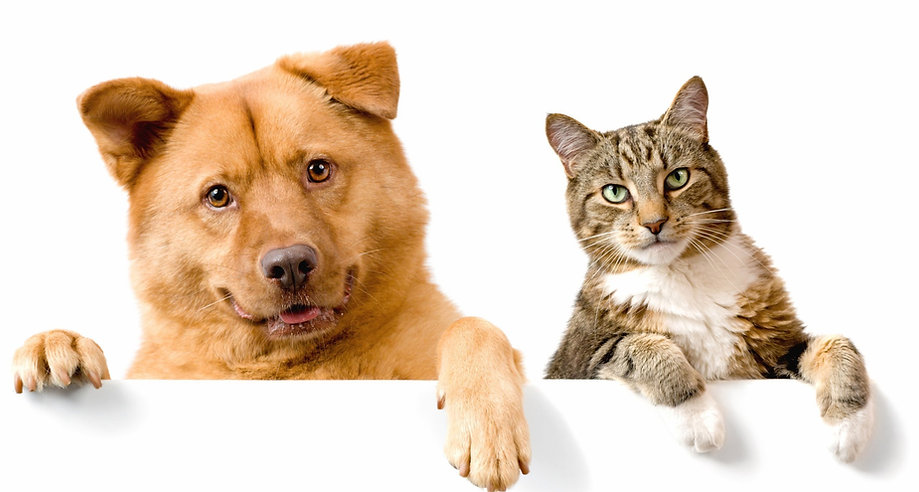 friends-animals-cat-dog.jpg