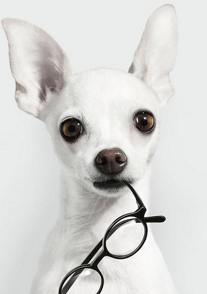 собака с очк