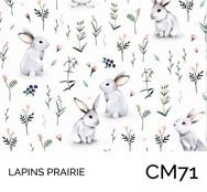 CM71.jpg