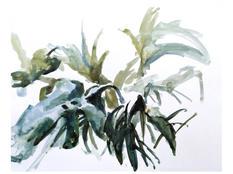 Plants, Mare Street, 30x40cm, Ink on pap