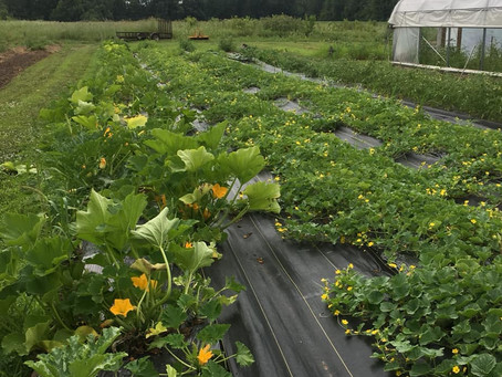 Grow Watermelons Grow!