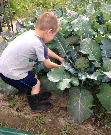Boy Harvesting.jpg