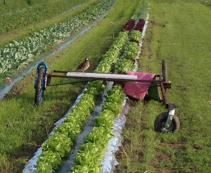 Quail on Chaplin Farms Equiptment