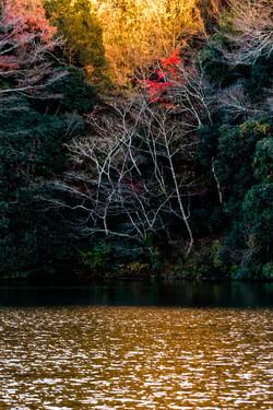 lake kameyama torii gate japan 亀山湖 夕焼け 夕