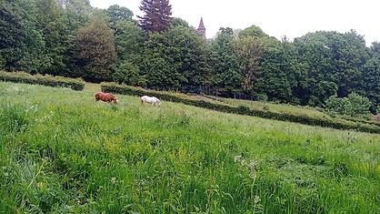 chevaux groupe collectif domaine des possibles habitat participatif ecolieu clermont ferrand orcines ternant puy de dome auvergne