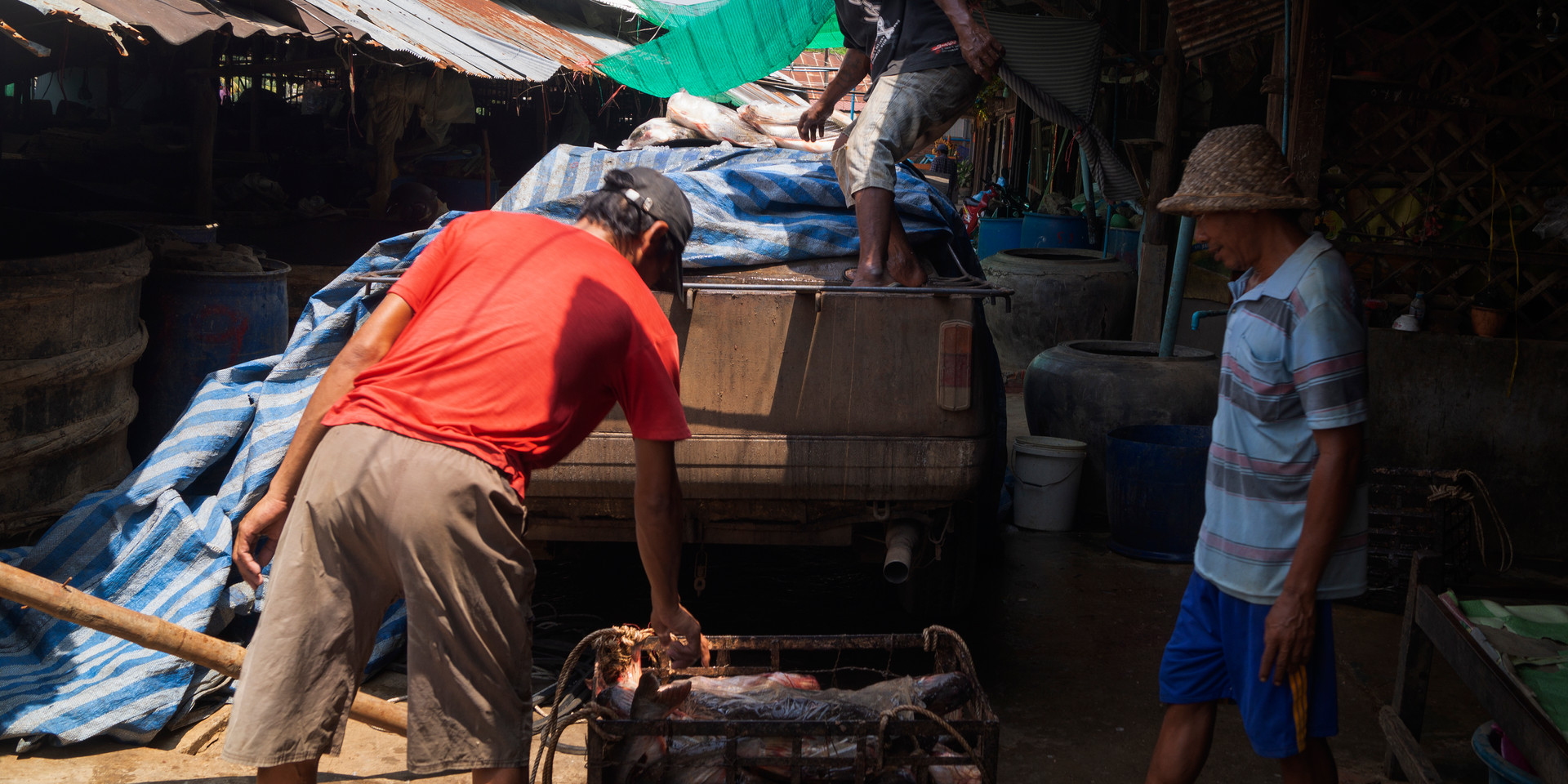 Fish Market, Battambang Province