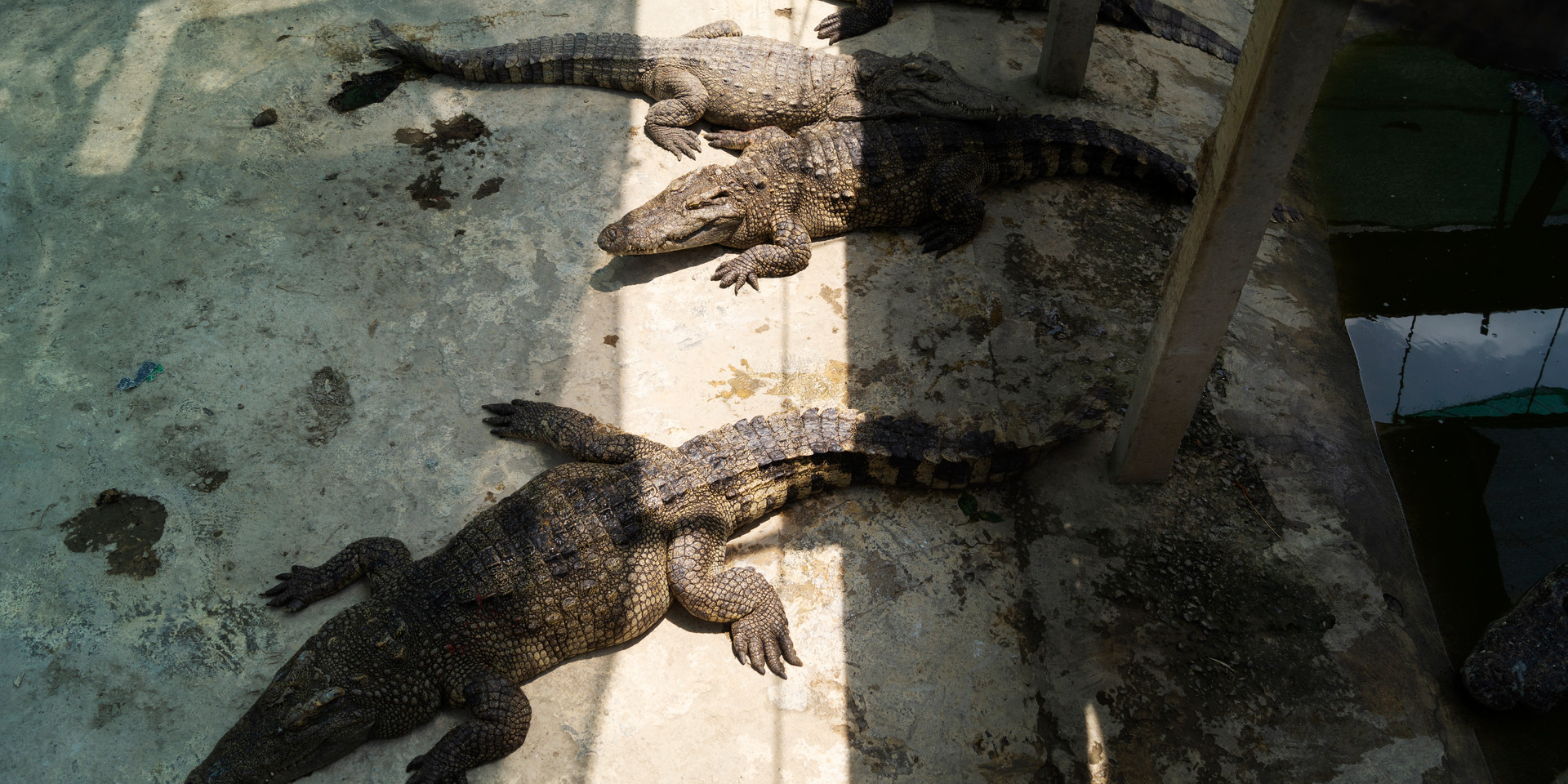 Crocodile Farm, Battambang Province