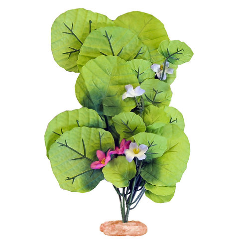 Blue Ribbon Pet Products Broad Lily-Leaf with Flowering Buds