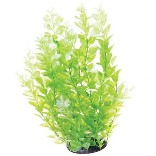 "Underwater Treasures 20"" White Tip Cardamine Aquarium Plant"