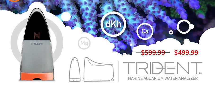 Neptune Trident Sale